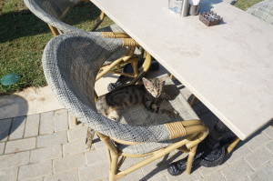 Вот вам напоследок довольный турецкий кот