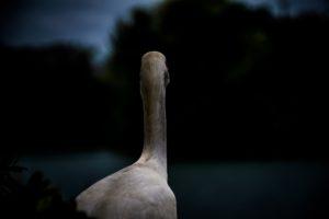 Photo by Jose Chomali on Unsplash