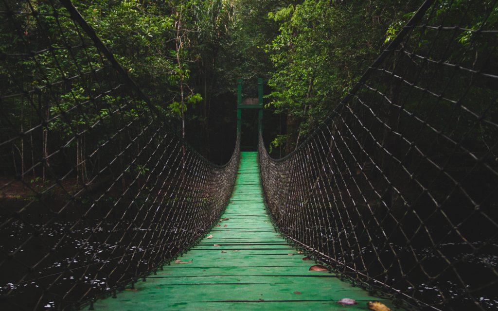 Amazon. Photo by Michel Paz on Unsplash
